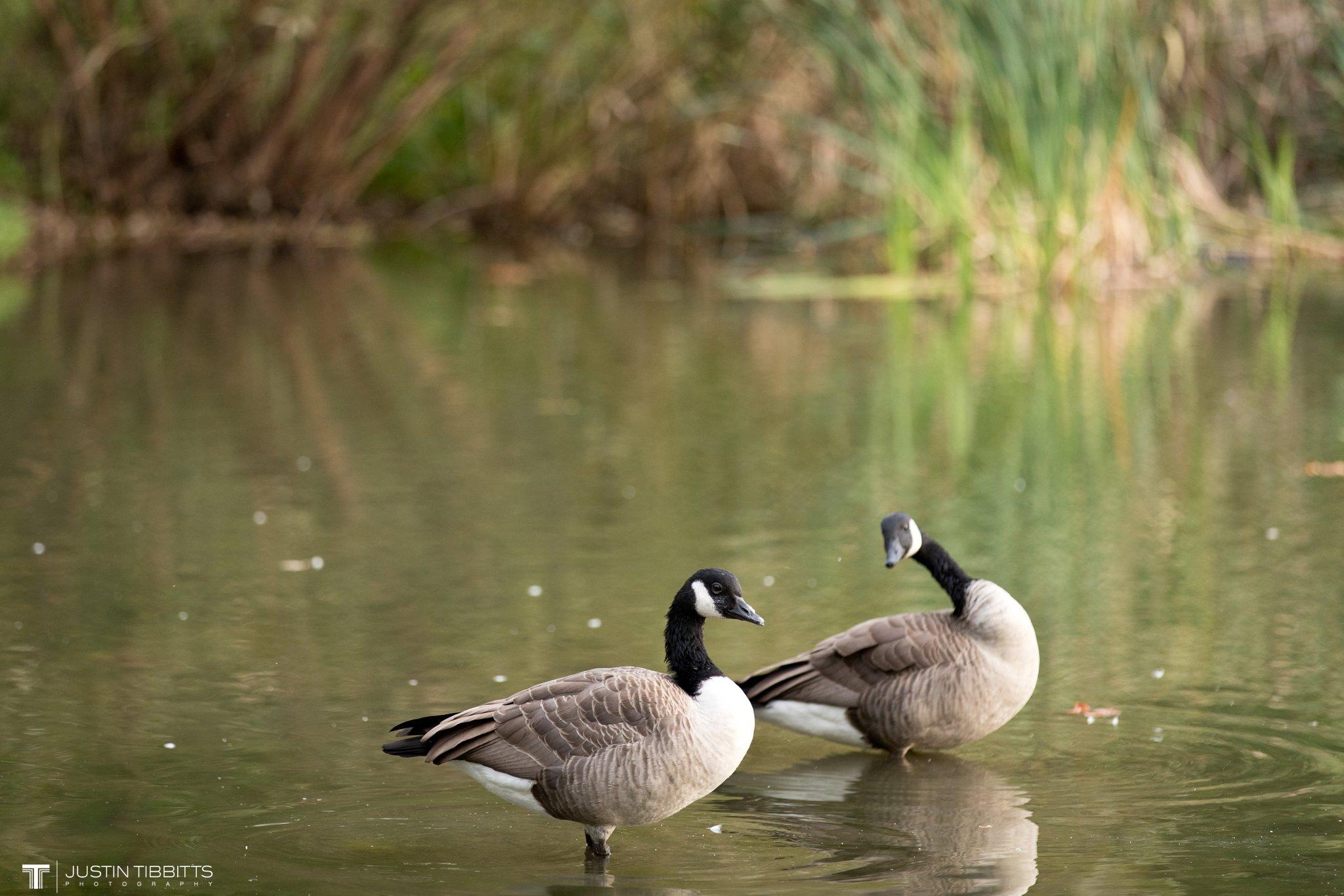 washington-park-albany-ny-engagement-photos-with-andrea-and-dan_0023